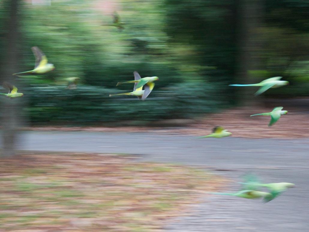 Natur und Stadt, Papageien