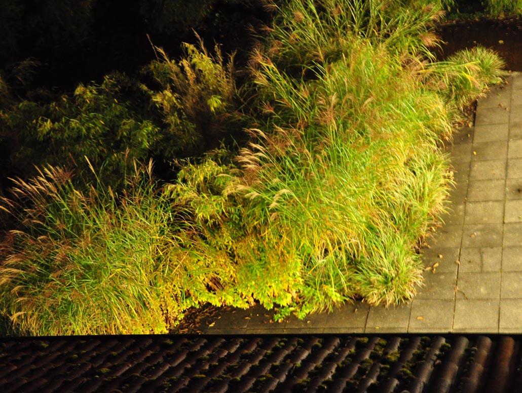 Natur und Stadt, Teichgräser